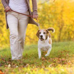 Walk for a Dog Fundraiser