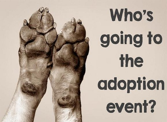 Image result for adoption event
