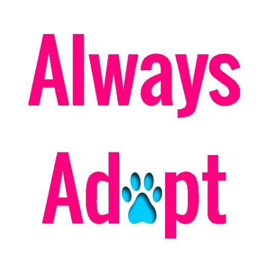 Always Adopt